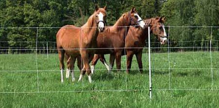 Euro-Netz Pferde 120/2, Länge 30,5 m