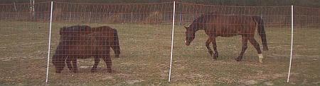 Euro Mustangnetz 170/2, Länge 25 m