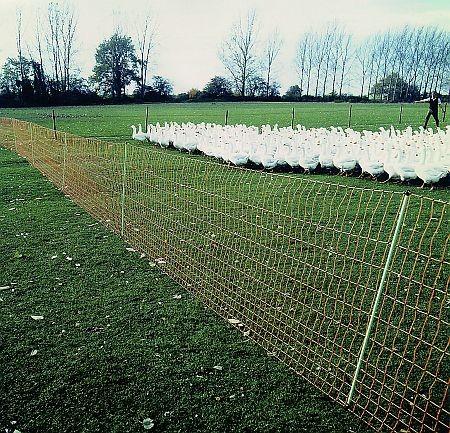 Euro-Netz Geflügel Jumbo 112/2, Länge 50 m